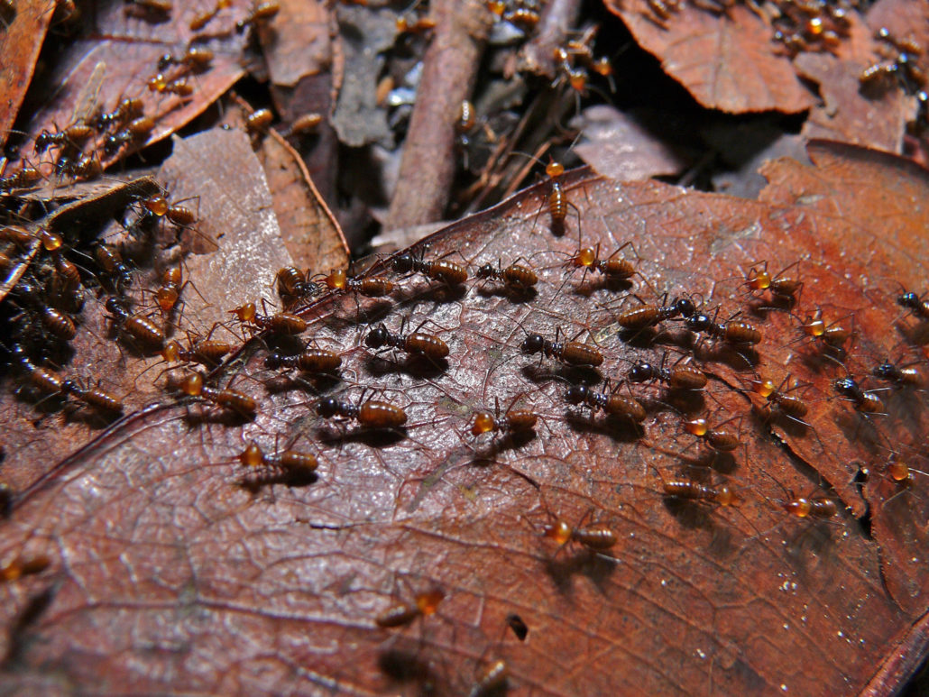 termites termite control and prevention and elimination St. Charles pest control