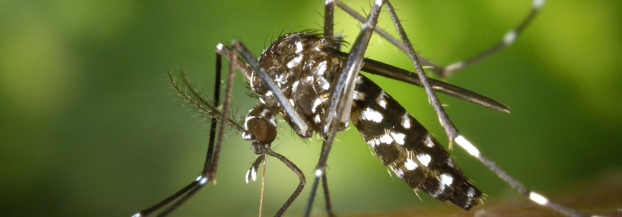 guard against mosquitoes this tiger mosquito season with our pest control services.